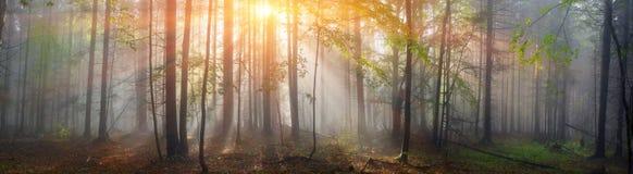 Bosque cárpato mágico en el amanecer