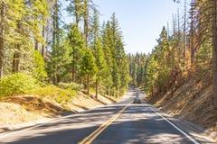 Bosque caliente de los tonos en Yosemite imágenes de archivo libres de regalías