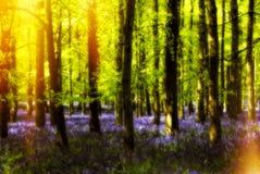 Bosque caliente del verano Foto de archivo