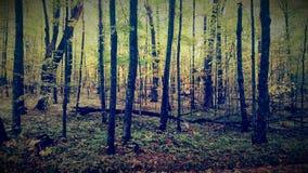 Bosque cambiante de Minnesota Fotos de archivo