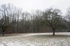 Bosque cambiante del invierno Fotografía de archivo