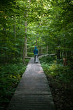 Bosque canadiense por la mañana Foto de archivo libre de regalías