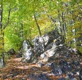 Bosque cerca de la ciudad Ruzomberok Fotos de archivo