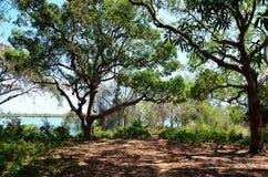 Bosque cerca de la playa, Zanzibar, Tanzania imagenes de archivo