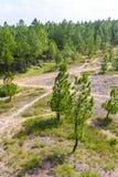 Bosque cerca de la tonalidad, Vietnam del pino imágenes de archivo libres de regalías