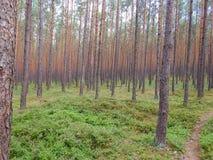 Bosque cerca del lago Turawa Fotos de archivo libres de regalías