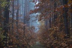 bosque climático fotografía de archivo