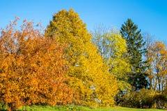 Bosque coloreado brillante del otoño Fotos de archivo