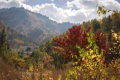 Bosque colorido imagen de archivo