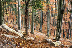 Bosque colorido de hojas caducas del otoño, paisaje estacional natural imagen de archivo libre de regalías