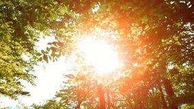 Bosque colorido del árbol en la naturaleza de la llamarada del sol de la puesta del sol almacen de metraje de vídeo