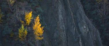 Bosque colorido del otoño con el abedul Imagen de archivo libre de regalías