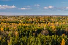 Bosque colorido del otoño contra el cielo azul Fotos de archivo