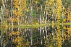 Bosque colorido del otoño en la orilla del lago Fotos de archivo libres de regalías