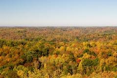 Bosque colorido en otoño Foto de archivo libre de regalías