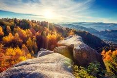 Bosque colorido majestuoso Imagen de archivo libre de regalías