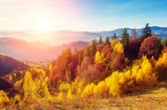 Bosque colorido majestuoso Imágenes de archivo libres de regalías