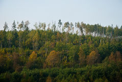 Bosque conífero Imagenes de archivo