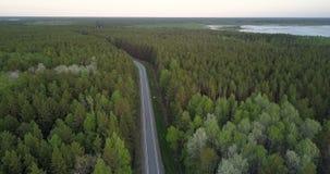 Bosque conífero boreal de la vista de pájaro con el camino de los puntos del abedul almacen de video