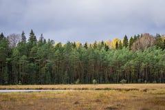 Bosque conífero del otoño con el lago Norovskoe, Rusia Fotos de archivo