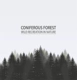 Bosque conífero del pino libre illustration