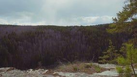Bosque conífero del pino hermoso del paisaje en la puesta del sol reserva turística del lugar para la reconstrucción y el turismo almacen de metraje de vídeo