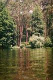 Bosque conífero en la charca Imagen de archivo libre de regalías