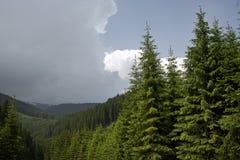 Bosque conífero en la montaña Fotos de archivo libres de regalías