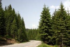 Bosque conífero en la montaña Fotos de archivo