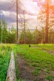 Bosque conífero en la puesta del sol en la cuesta de la montaña de Sugomak en Urales meridionales, Rusia Imagen de archivo libre de regalías