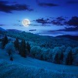 Bosque conífero en una cuesta de montaña en la noche Imágenes de archivo libres de regalías