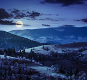 Bosque conífero en una cuesta de montaña en la noche fotografía de archivo