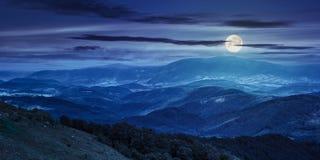 Bosque conífero en una cuesta de montaña en la noche Foto de archivo libre de regalías