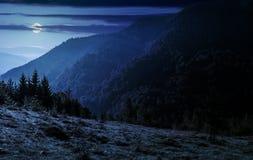Bosque conífero en una cuesta de montaña en la noche Imagen de archivo