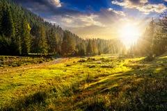 Bosque conífero en una cuesta de montaña en la puesta del sol imagen de archivo libre de regalías