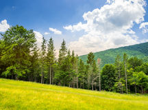 Bosque conífero en una cuesta de montaña en la salida del sol foto de archivo libre de regalías