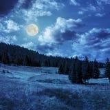 Bosque conífero en una cuesta de montaña en linght de la luna imagenes de archivo
