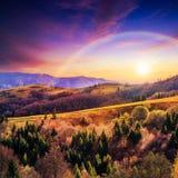 Bosque conífero en una cuesta de montaña escarpada en la puesta del sol imágenes de archivo libres de regalías