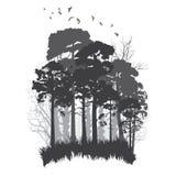 Bosque conífero salvaje ilustración del vector