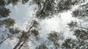 Bosque conífero y el cielo azul Visión desde la parte inferior a rematar Rotación lisa y movimiento liso almacen de video