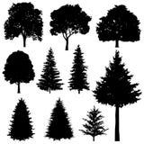 Bosque conífero y siluetas de hojas caducas del vector de los abetos fijadas stock de ilustración