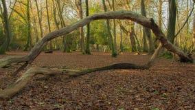 Bosque con el árbol quebrado Imagenes de archivo