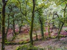 Bosque con el musgo en los árboles en color brillante en el bosque en Gere Imagen de archivo libre de regalías