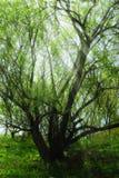 Bosque con el sol Imágenes de archivo libres de regalías