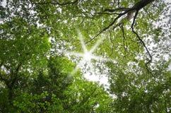 Bosque con el sol detrás Foto de archivo