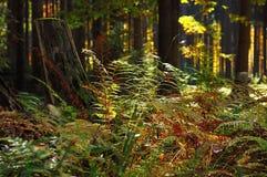 Bosque con el tocón de árbol Fotos de archivo