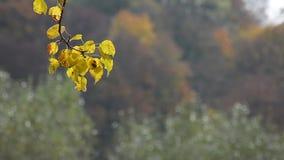 Bosque con follaje colorido en día soleado del otoño metrajes