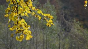 Bosque con follaje colorido en día soleado del otoño almacen de metraje de vídeo