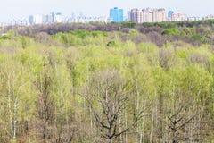 Bosque con follaje joven y horizonte en primavera Foto de archivo libre de regalías