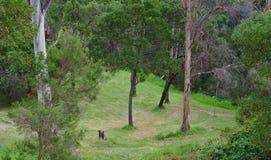 Bosque con la hierba verde y los árboles verdes fotos de archivo
